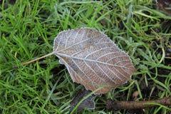 Лист дерева на зеленой траве Стоковое фото RF