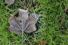 Лист дерева на зеленой траве Стоковые Изображения