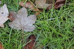 Лист дерева на зеленой траве Стоковые Фото