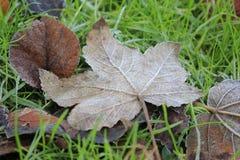 Лист дерева на зеленой траве Стоковое Фото
