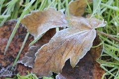 Лист дерева на зеленой траве Стоковые Изображения RF