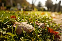 Лист дуба в росе утра на луге в подсвеченном Стоковая Фотография RF
