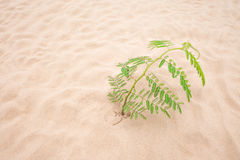 Лист дерева зеленые на пляже песка Стоковые Изображения RF