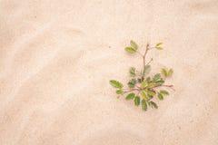 Лист дерева зеленые на пляже песка Стоковое Изображение RF