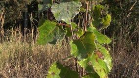 Лист дерева покрыли слабый заморозок в утре осени луга предыдущем 4K видеоматериал