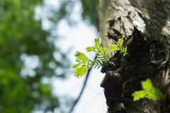 Лист дерева Стоковая Фотография
