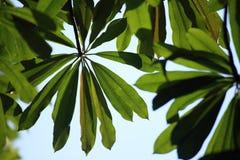 Лист дерева Стоковое фото RF