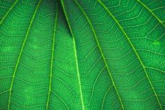 Лист дерева Стоковая Фотография RF