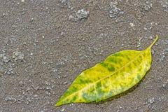 Лист желтого зеленого цвета на предпосылке пола почвы стоковые изображения rf