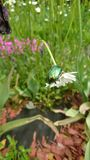 Лист-жук Стоковое Изображение RF