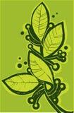 Лист залива Стоковое Фото