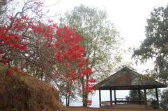 Лист зеленого цвета цвета изменения дерева к красному цвету в сезоне осени с старым павильоном na górze горы Стоковые Фотографии RF