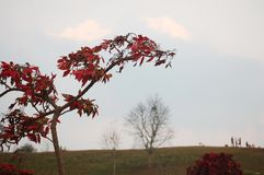 Лист зеленого цвета цвета изменения дерева к красному цвету в сезоне осени na górze горы Стоковые Изображения RF