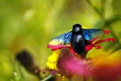 Лист зеленого цвета Ladybug на солнечный день стоковая фотография