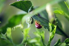 Лист зеленого цвета Ladybug на солнечный день стоковые изображения