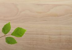 Лист зеленого растения на деревянной предпосылке Стоковые Изображения RF