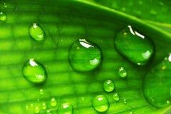 Лист зеленого растения Стоковое Фото