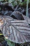 Лист зимы Стоковое Изображение RF