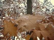 Лист зимы стоковая фотография rf