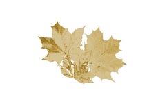 Лист золота Стоковая Фотография