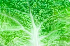 Лист листовой капусты Стоковые Фотографии RF