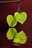 Лист и вода Стоковые Изображения