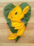Лист и лепестки солнцецвета Стоковая Фотография