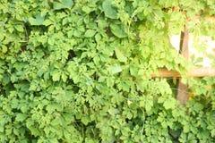 Лист и зеленый цвет на стене Стоковая Фотография