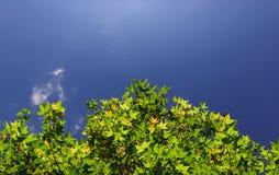 Лист и небо Стоковая Фотография