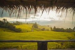 Лист и рис field в саде Стоковые Изображения RF