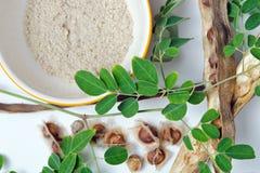 Лист и семя Moringa на белой предпосылке Стоковые Изображения RF