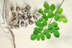 Лист и семя Moringa на предпосылке деревянной доски Стоковое Изображение RF
