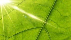Лист и солнце Стоковое фото RF