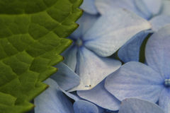 Лист и цветки Стоковые Фото