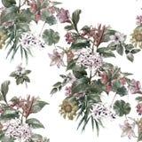 Лист картины акварели и цветки, безшовная картина на белой предпосылке Стоковая Фотография RF
