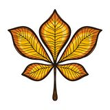 Лист каштана осени желтые изолированные на белизне Стоковые Фото
