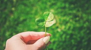 Лист клевера st patrick s дня счастливый Стоковое Фото