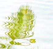 Лист кокоса отражают воду формы Стоковое Фото