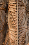 Лист кокоса Стоковое Изображение