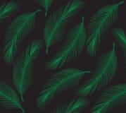 Лист кокоса Стоковые Изображения RF