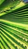 Лист кокосов Стоковое Фото