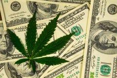 Лист конопли на куче 100 долларовых банкнот Стоковая Фотография RF