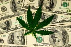 Лист конопли на куче 100 долларовых банкнот Стоковое Изображение RF