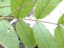 Лист красоты полные в деревьях стоковая фотография