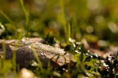 Лист листвы с росой в backlight с bokeh Стоковые Фото
