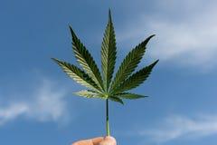 Лист марихуаны с рукой стоковое фото rf