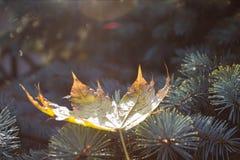 Лист на ветви Стоковая Фотография