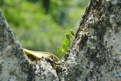 Лист на дереве Стоковые Изображения RF