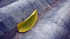 Лист на листе цемента Стоковые Изображения RF
