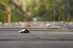 Лист на мосте Стоковое фото RF